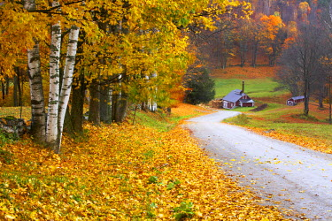 USA11820AW Country Lane Leading to The Sugar Mill, near Woodstock, Vermont, USA