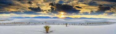 USA12033AW Yucca Plants, White Sands National Monument, Alamogordo, New Mexico, USA