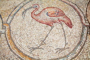 ISR0120 Israel, Caesarea. Mosaic of a Flamingo at a Roman Villa.