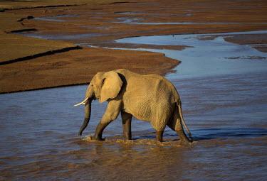 KEN10294AW elephant crosses a river in Samburu, Kenya, Africa