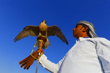 HMS2185885 United Arab Emirates, Dubai, desert, falconer