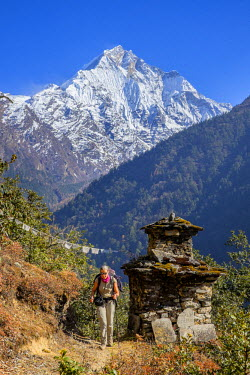 Nepal, Gandaki zone, Tsum valley trek, climbing to Gompa Lungdang monastery (alt.3300m), Ganesh I or Yangra Kangri (alt.7422m) in the background