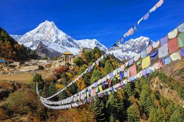 HMS2140788 Nepal, Gandaki zone, Manaslu Circuit, between Prok and Lho, the Mount Manaslu (alt.8156m) from the village of Lho (alt.3180m) and Ribung Gompa monastery