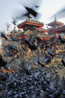 HMS2193895 Nepal, Kathmandu valley, Kathmandu, Durbar Square listed as World Heritage by UNESCO, pigeons at Durbar Square (archives)