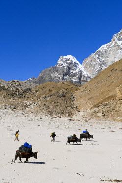HMS0310486 Nepal, Sagarmatha National Park, Solu Khumbu District, Everest area, on the way to Gorak Shep (5140m)