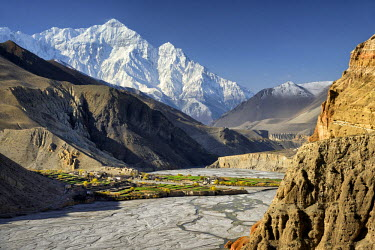 HMS2169803 Nepal, Gandaki zone, Upper Mustang (near the border with Tibet), village of Chuksang (2900m) surrounded by fields in the valley of the Kali Gandaki river, Nilgiri peak (7061m)