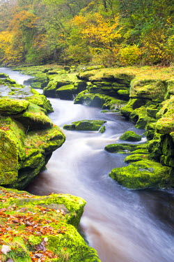 ENG14124AW United Kingdom, England, North Yorkshire, Skipton. The Strid, part of the Bolton Abbey Estate, is a reputedly dangerous stretch of water where the River Wharfe narrows through a very deep channel.