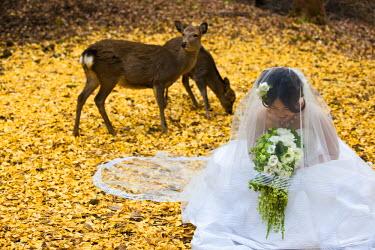 HMS0366936 Japan, Honshu Island, Kinki Region, city of Nara, Nara Park, young bride in front of deers designated as National Treasure
