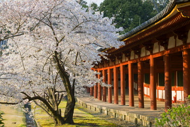 HMS0331269 Japan, Honshu Island, Kinki Region, city of Nara, Historic Monuments of Ancient Nara listed as World Heritage by UNESCO, the great Todai ji Temple is the headoffice of the Buddhist school of Kegon, a...