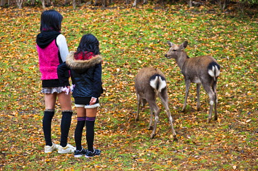 HMS0366990 Japan, Honshu Island, Kinki Region, city of Nara, Nara Park, girls watching at the deers designated as National Treasure