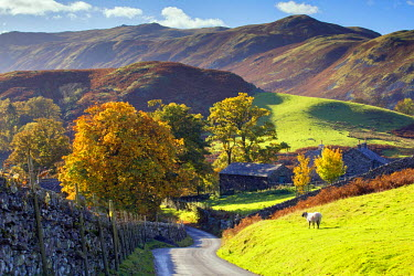 ENG14169AW England, Cumbria, Martindale. A country lane at Martindale village in the autumn.