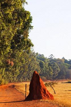 SWA0008 Swaziland, Mlilwane Wildlife Sanctuary, termite mound