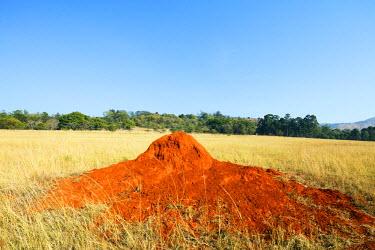SWA0011 Swaziland, Mlilwane Wildlife Sanctuary, termite mound
