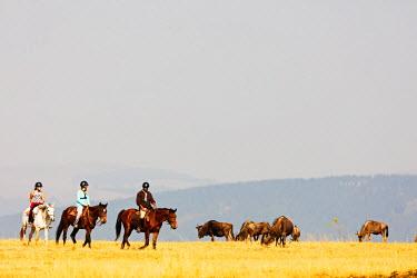 SWA0023 Swaziland, Mlilwane Wildlife Sanctuary, horse riding safari, blue wildebeest - Connochaetes taurinus