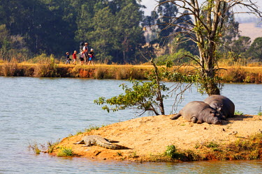 SWA0026 Swaziland, Mlilwane Wildlife Sanctuary, hippo - Hippopotamus amphibius and tourists