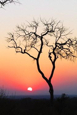 SWA0053 Swaziland, Hlane Royal National Park, sunset