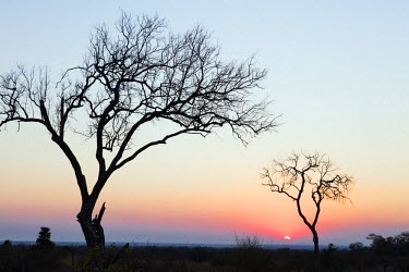 SWA0054 Swaziland, Hlane Royal National Park, sunset