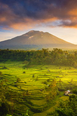 IDA0741AW Sidemen valley, Rendang, Karangasem Regency, Bali, Indonesia. Paddy fields with Gunung Agung (Mt Agung) volcano at sunrise.