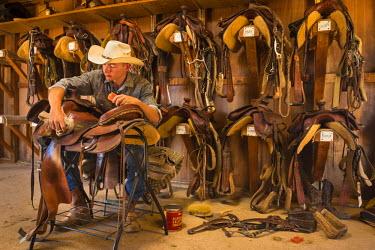 HMS2191601 United States, Arizona, Tucson, White Stallion Ranch, saddle cleaning
