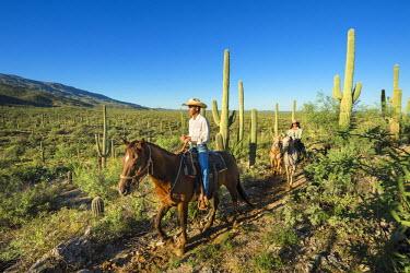 HMS2191653 United States, Arizona, Tucson, Tanque verde Ranch, Sanguaro National Park, horse hike