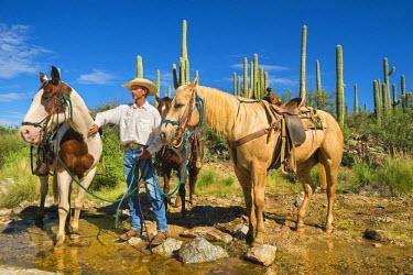 HMS2191654 United States, Arizona, Tucson, Tanque verde Ranch, Sanguaro National Park, horse hike