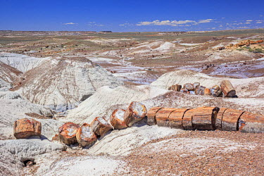 HMS2259064 United States, Utah, Colorado Plateau, Petrified Forest National Park, Crystal Forest, petrified logs from the late Triassic period, 225 million years ago