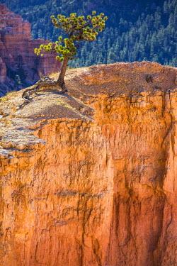 HMS2151474 United States, Utah, Bryce Canyon National Park