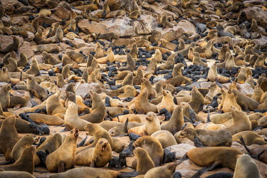 NAM6353AW Africa, Namibia, Cape Cross. The seal colony