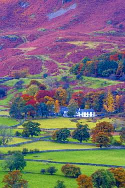 UK08047 UK, England, Cumbria, Lake District, Borrowdale on south bank of Derwentwater