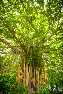 Banyan Tree on an island in the South Male Atoll, Maldives