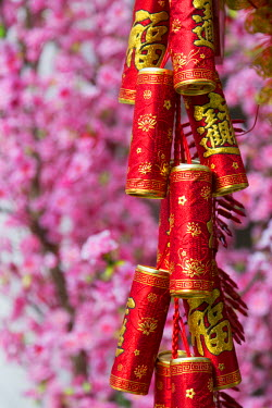 CH11008AW Chinese New Year decorations and plum blossom, Hong Kong