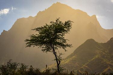 CVE0071AW africa, Cape Verde, Santiago. View of the Pico da Antonia