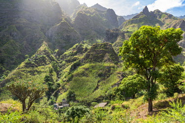 CVE0103AWRF Africa, Cape Verde, Santo Antao. Panoramic view of the Paul valley with a dragon tree.