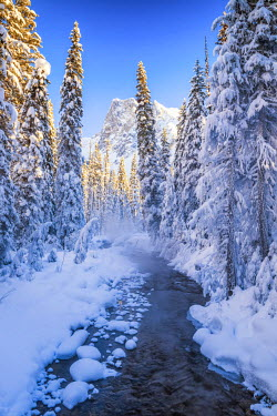 CAN3148AW Mt. Burgess & Snow-covered Pine Trees, Yoho National Park, British Columbia, Canada