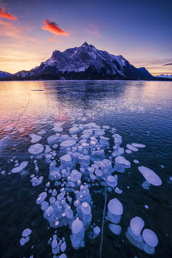 CAN3170AW Mt. Michener & Frozen Bubbles in Abraham Lake at Sunrise, Kootenay Plains, Alberta, Canada