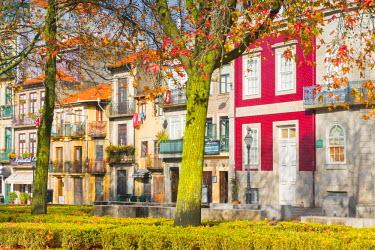 CLKAB53808 Autumn in Porto. Oporto city, Porto district, Portugal, Europe