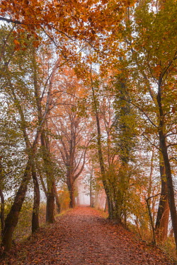 CLKAB52452 Tree-lined street in autumn near the Adda river. Airuno, Lecco province, Lombardy, Italy, Europe