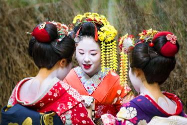 JAP0997AW A group of young Maiko, Arashiyama, Kyoto, Japan