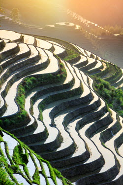 CH11225AW China, Guangxi Province, Longsheng, Long Ji rice terrace filled with water in the morning with Tiantou village in the background