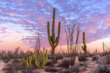 MEX1764AW Latin America, Mexico, Baja California, desert