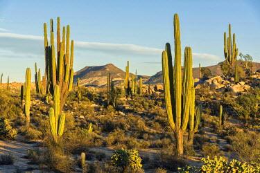 MEX1768AW Latin America, Mexico, Baja California, Desert landscape near Catavinia
