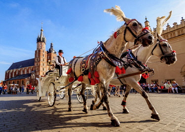 POL1696AW Poland, Lesser Poland Voivodeship, Cracow, Main Market Square, Horse Carriage with St. Mary Basilica in the background