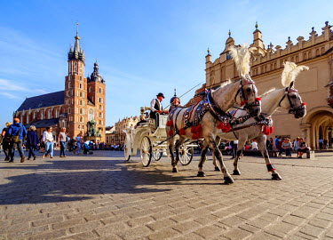 POL1761AW Poland, Lesser Poland Voivodeship, Cracow, Main Market Square, Horse Carriage with St. Mary Basilica in the background