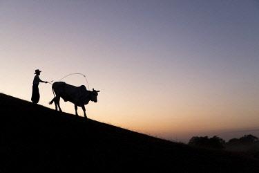 MYA2096AW A Burmese farmer leads a bull at sunset along the crest of a hill, Bagan, Myanmar