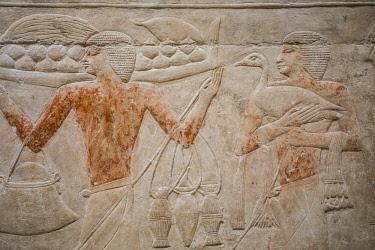 EG01388 Hyroglyphs in the Mastaba (tomb) of Kagemni (c. 2321-2290 B.C.) by the Pyramid of Teti, Saqqara, Nr Cairo, Egypt