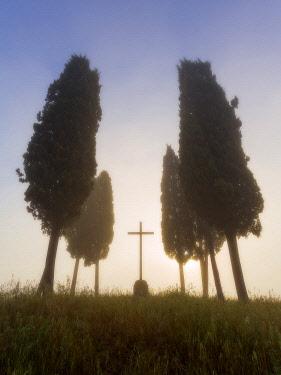 CLKAA35436 San Quirico d'Orcia, Siena, Tuscany, Italy, cypress in San Quirico