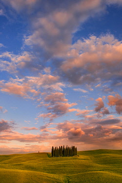 CLKLG36893 Italy, Tuscany, Siena District, Orcia Valley - cypresses at sunset