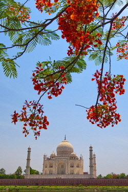 CLKRM5265 Taj Mahal represents the finest architectural and artistic achievement through perfect harmony and excellent craftsmanship in a whole range of Indo-Islamic sepulchral architecture Agra, India