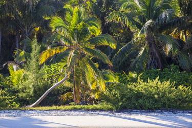 BA01218 Bahamas, Abaco Islands, Elbow Cay, Tihiti beach