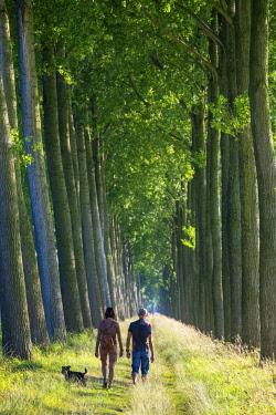 BEL1696AW Belgium, West Flanders (Vlaanderen), Damme. Rows of trees along the Damse Vaart canal.
